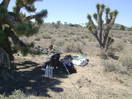 After one last camp breakfast and a pot of tea, I take down the tent while enjoying the Cima Dome joshua tree forest