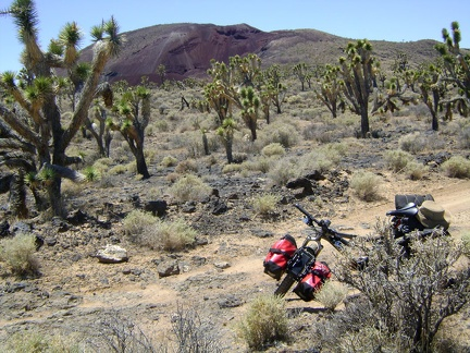I pause briefly on the rough road to look back through the joshua trees at the Cima mining area in the background