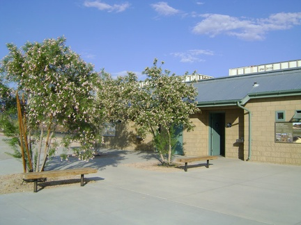 Desert willows bloom and attract hummingbirds outside the Kelso Depot bathroom building