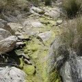 Today, some moisture, mud and algae remain in the otherwise-dry creek at North Coyote Springs