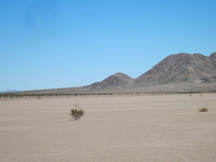 A lone creosote bush pops out of the ground at Broadwell Dry Lake