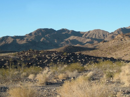 Dry ivory tufts from last year dot a black volcanic outcrop in the Bristol Mountains foothills east of Broadwell Dry Lake