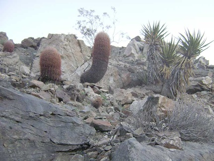 There are a lot of barrel cacti on the surrounding hillsides, which isn't apparent at a distance