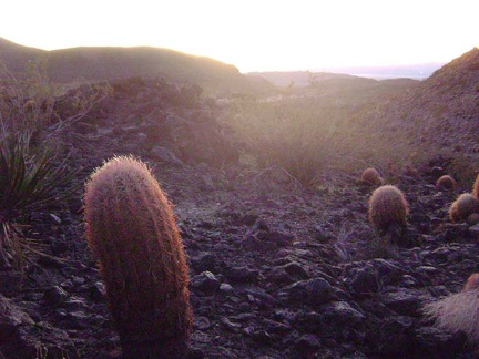 Barrel cacti catching the last light of day on the hill above Indian Springs