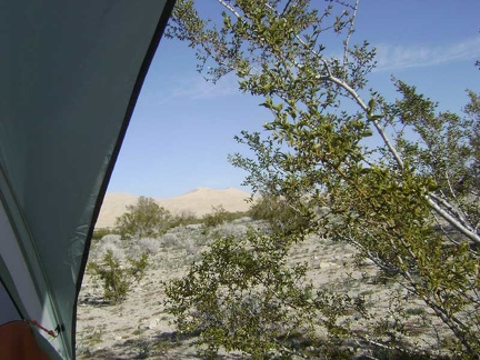 Awake, I peer out the back of my tent to see a sunny day, Kelso Dunes, and a creosote bush poking me in the face