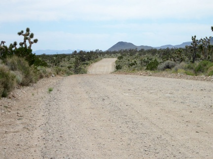 Ivanpah Road rides ever so slightly downhill across Lanfair Valley
