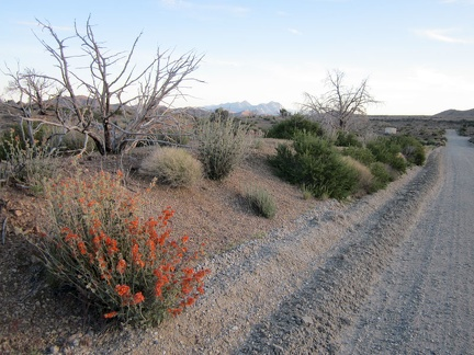 "I make it up to the crest of Wild Horse Canyon Road and a few orange desert-mallow flowers say ""hello"""