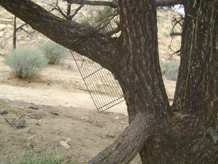 A BBQ grate hangs from that lone pinon pine in the wash