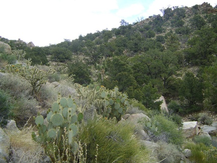 OK, I've checked out Live Oak Spring; now I'm going to try walking over the hills toward Mid Hills campground
