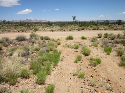 My five-mile ride across the Sagamore Canyon Cut-Off road comes to an end when I reach the bigger Ivanpah Road