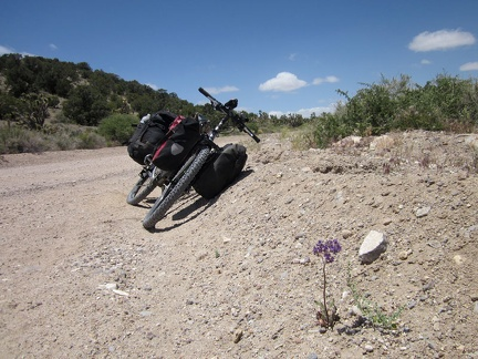 I pull over on Ivanpah Road to check out a couple of Phacelias (Desert canterbury bells) in bloom