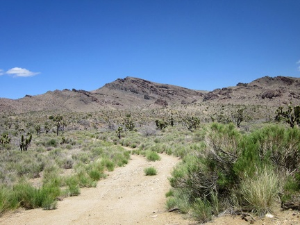 I pause briefly along Ivanpah Road when I pass the dirt track leading up to Bathtub Spring, where I hiked on day 6