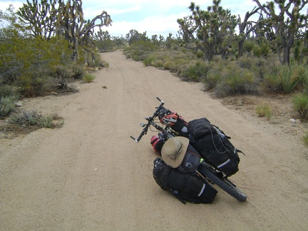 After my break at Thomas Place, I get back on Death Valley Mine Road and ride north through the joshua tree forest