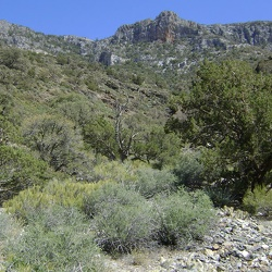 Day 14: Clark Mountain Range day hike (north side) from Pachalka Spring, Mojave National Preserve