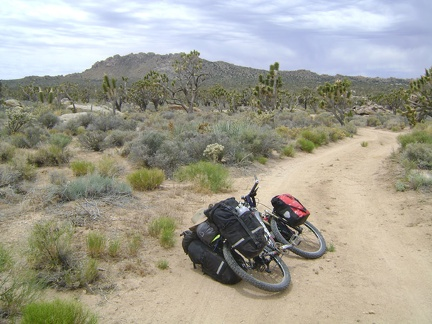 I ride the half-mile up the dirt road from my Cima Dome campsite and reach the pavement of Cima Road at noon sharp