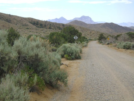 Wild Horse Canyon Road is one of my favourite mountain-bike rides in Mojave National Preserve