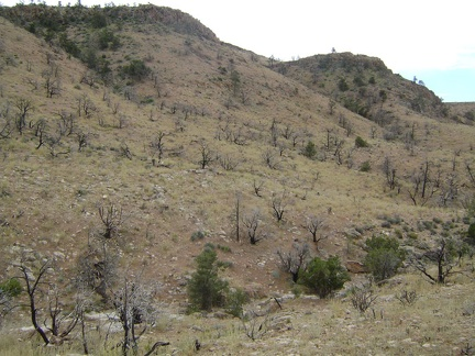 "I cross the juniper-studded drainage that is Beecher Canyon's ""headwaters"" and begin the climb up to Wild Horse Mesa"