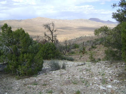 A few of the old junipers below Wild Horse Mesa appear to have escaped the ravages of the 2005 fires