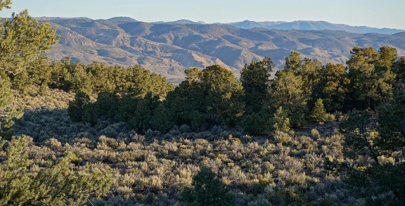 Morning, Humboldt-Toiyabe National Forest